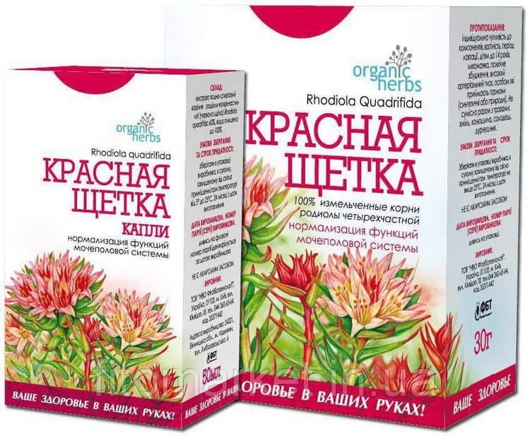 Польза, лечебные свойства и противопоказания к употреблению красной щетки