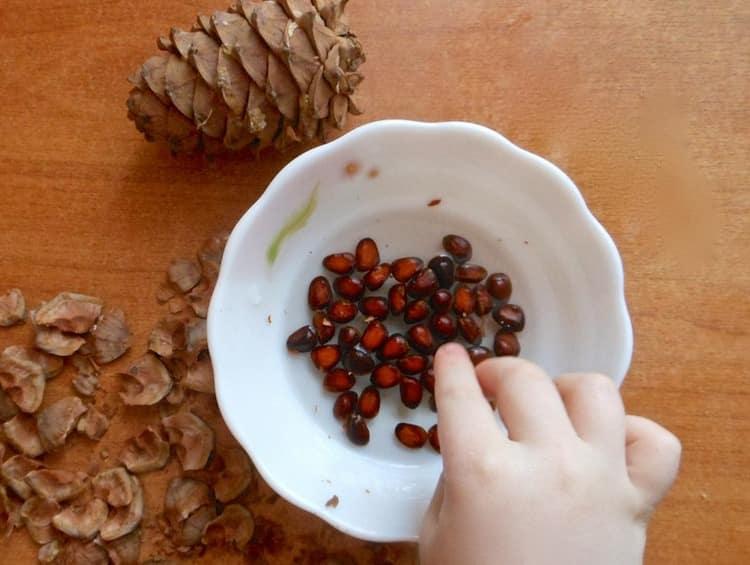 Неоспорима польза кедровых орехов для здоровья детей, а также беременных женщин.