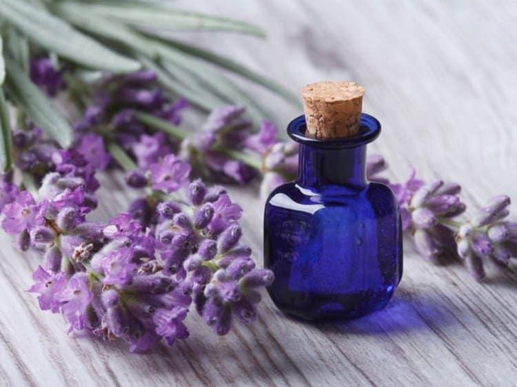 нашло свое применение и эфирное масло лаванды, обладающее огромным перечнем лечебных свойств.