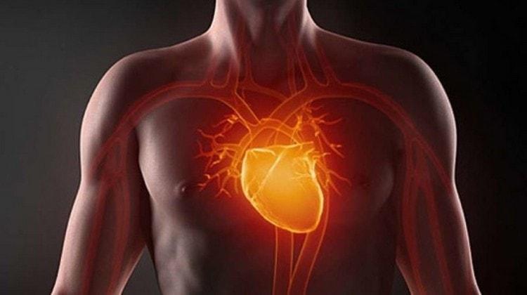 растение способствует здоровому состоянию сердечной мышцы.
