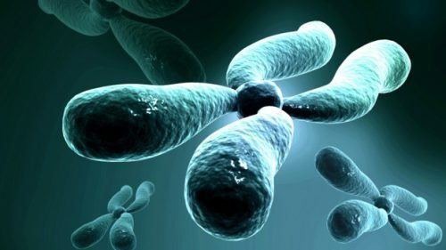 Вирус на хромосоме