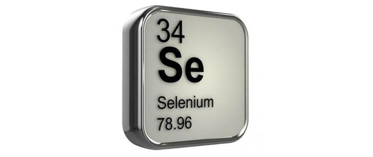 Полезное вещество селен в молочае палласа