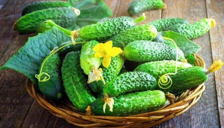 Маска из огурца для лица будет наиболее эффективной, если использовать именно домашние овощи.