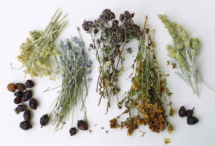 Травяные капли от заложенности носа