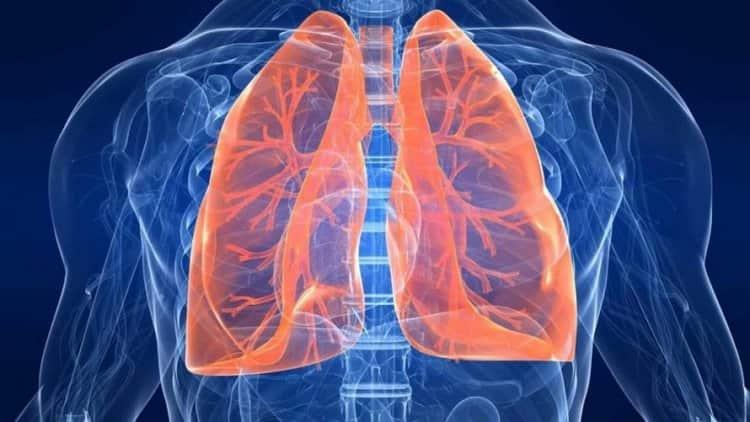 При помощи этого растения лечат астму, пневмонию, туберкулез.