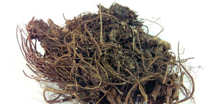 целебными свойствами обладает корень растения.