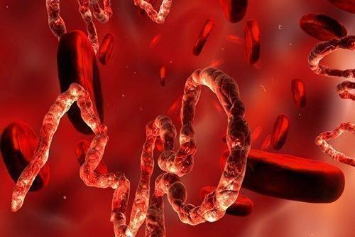 Антитела в крови