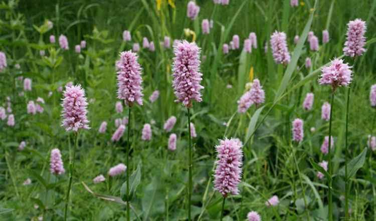Раковые шейки применение травы в медицине