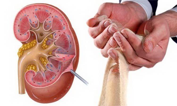 Корень пырея: лечебные свойства и противопоказания