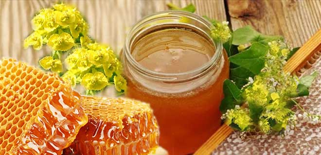 Мед из цветов молочая