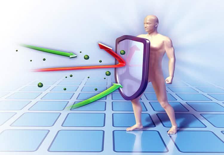 Повысит ли салал имунитет