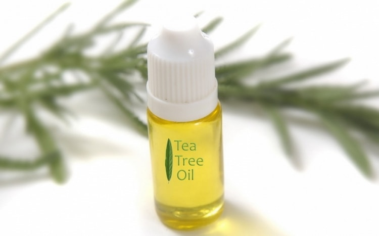 При грибковой ангине для лечения можно применять масло чайного дерева.