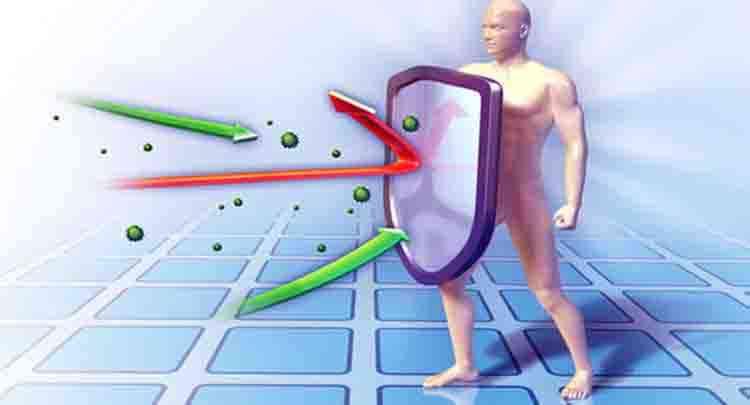 Бутень поможет иммунитету
