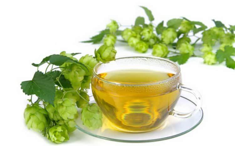 Как приготовить чай из хмеля