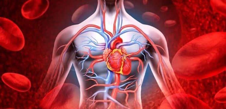 Османтус поможет нормализировать кровоток