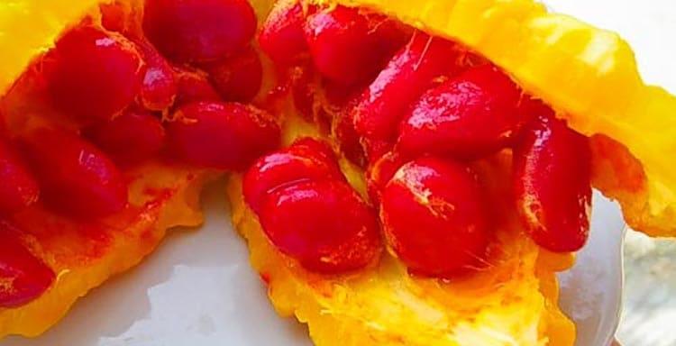Как созревают плоды момордики