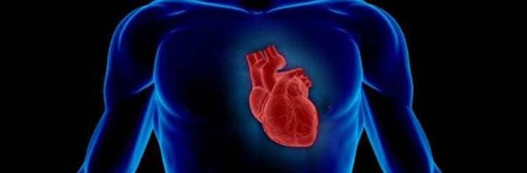 Позитивное влияние зеленого лука на сердце