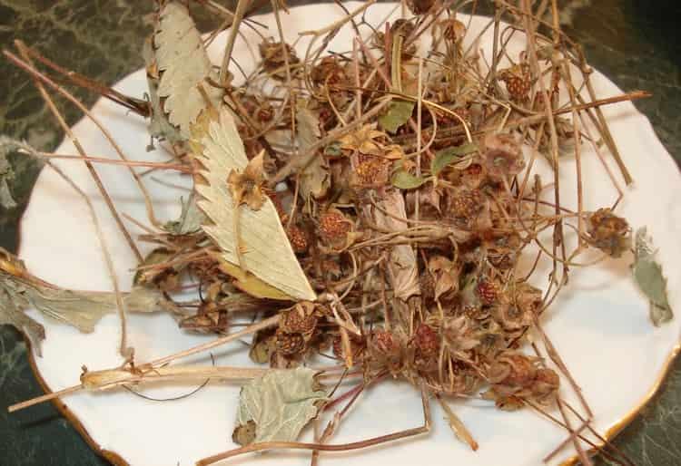 Растение можно заготавливать в сушеном виде.