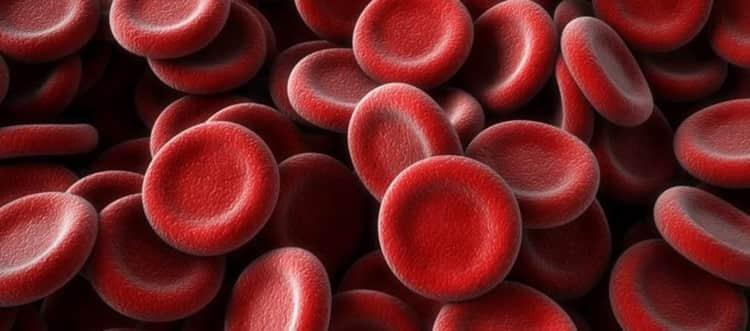 Олива нормализует состав крови