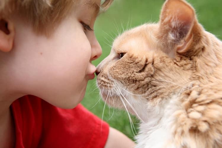 Стригущим лишаем особенно часто заражаются дети от животных.