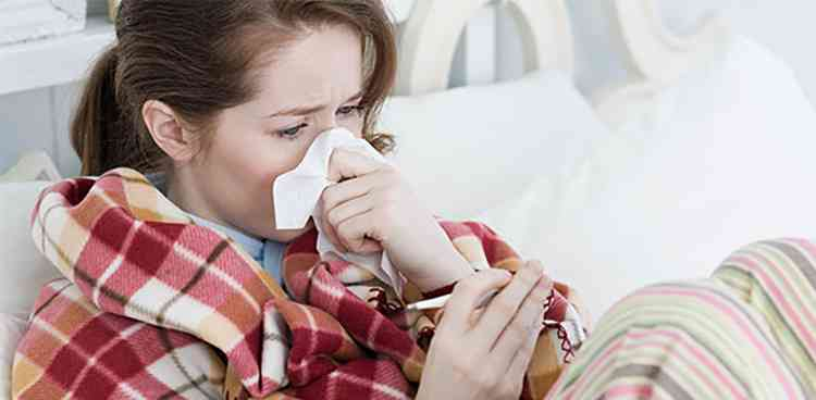 Чистец поможет от простуды