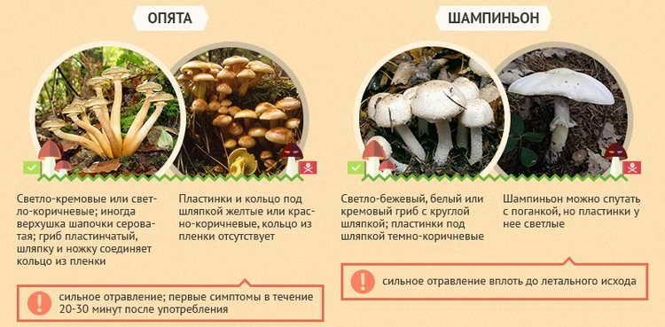 отравление грибами первая помощь в домашних условиях