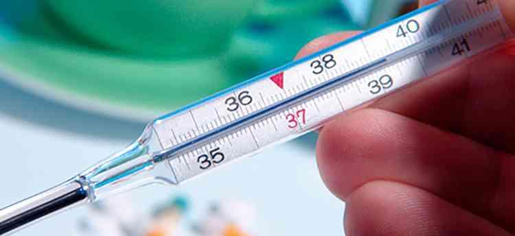 Эвкалипт поможет понизить температуру