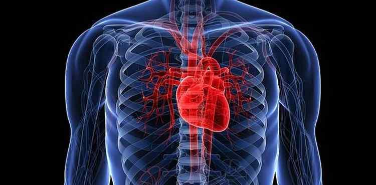 Польза аврана для сердца