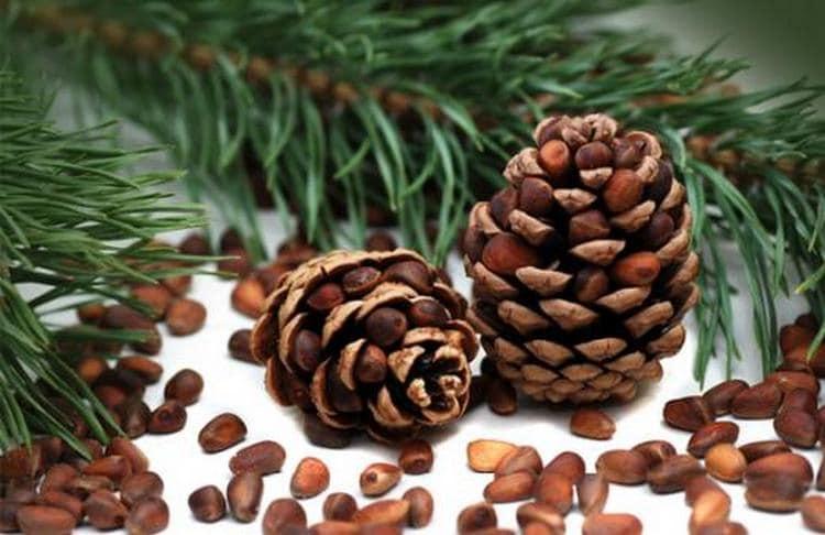 Эти орехи настолько питательны, что человек мог бы есть только их и получать все необходимые организму вещества.