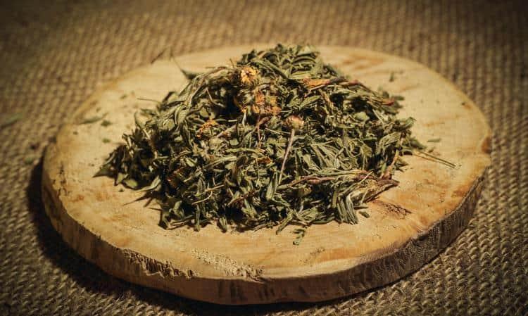 Хороший эффект на кишечник при развитии грибка дает курильский чай.
