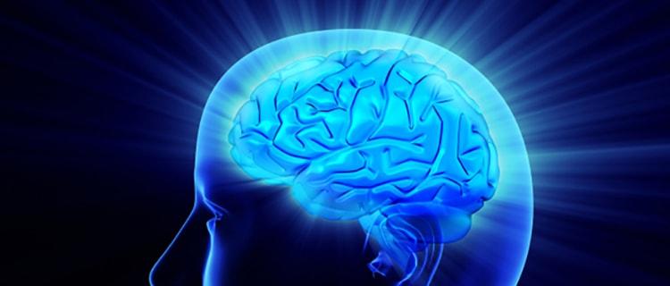 Оввс поможет улучшить мозговую деятельность
