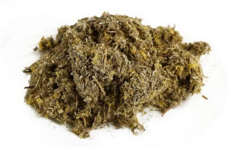 Польза, лечебные свойства и противопоказания к употреблению сушеницы