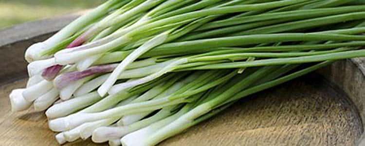 Простой зеленый лук помогает улучшить здоровье