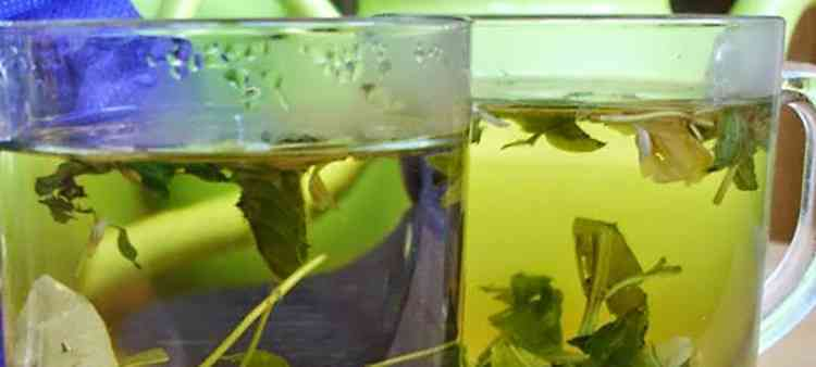 Бирючина травяной настой растения