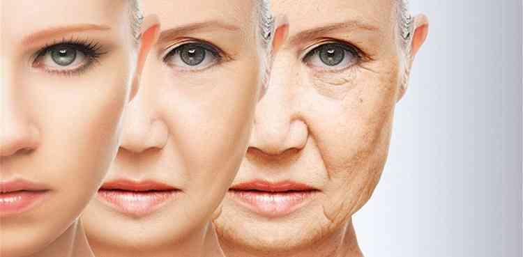 Агарикус поможет замедлить процесс старения