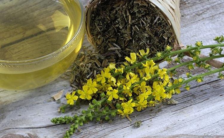 Узнайте все полезных свойствах репешка обыкновенного и противопоказаниях к его применению, почитайте отзывы о лечении этой травой.