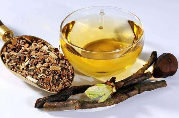 Используется в народной медицине и кора дерева.