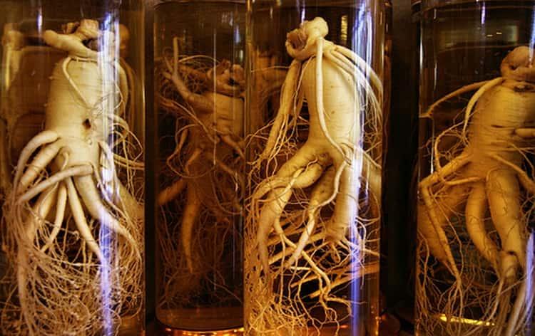 До сих пор из корня этого растения изготавливают различные талисманы.