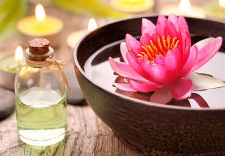 Польза, лечебные свойства и противопоказания к употреблению лотоса орехоносного