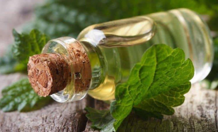 Узнайте также о свойствах эфирного масла мелиссы и его применении.