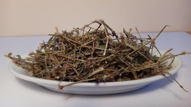 Как видите, трава горца птичьего (спорыша) нашла широкое применение в народной медицине.