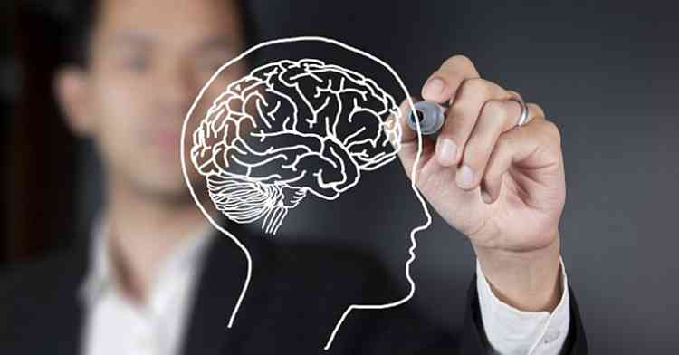 Шалфей поможет мозговой деятельности