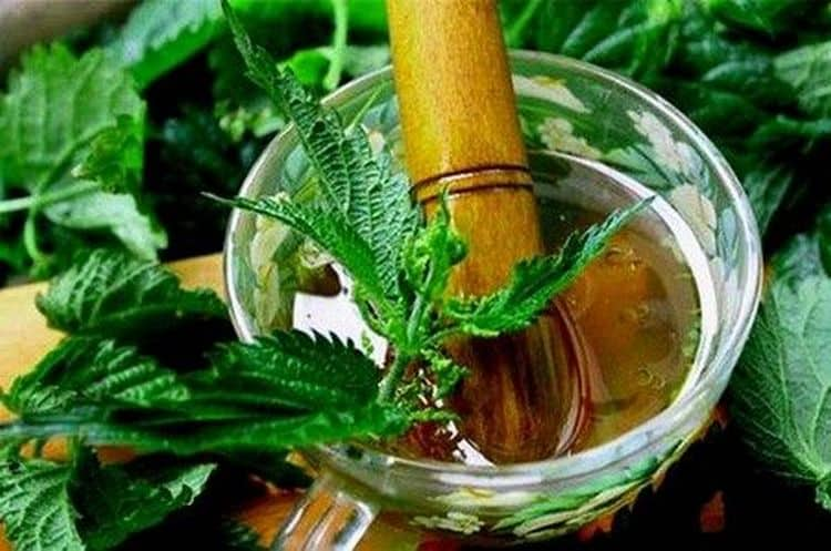 Лечебные свойства крапивы нашли свое применение в гинекологии при кровотечениях.