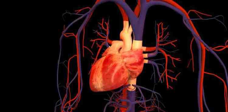 Борец растение наладит работу сердца