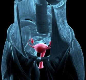 Прослеживание размещения органов в малом тазу