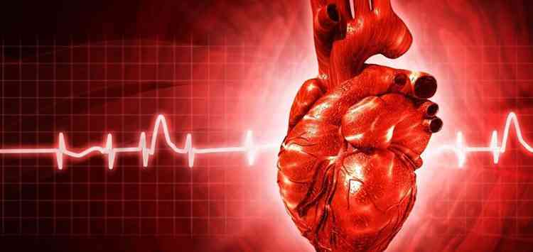 Бирючина при заболеваниях сердца