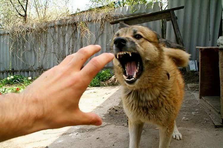 Полезные свойства колокольчика используются для заживления укусов собак и насекомых.