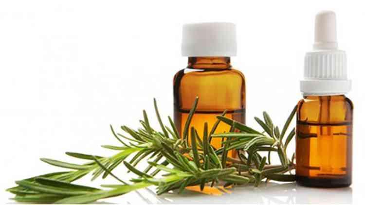 Розмариновое масло свойства и применение