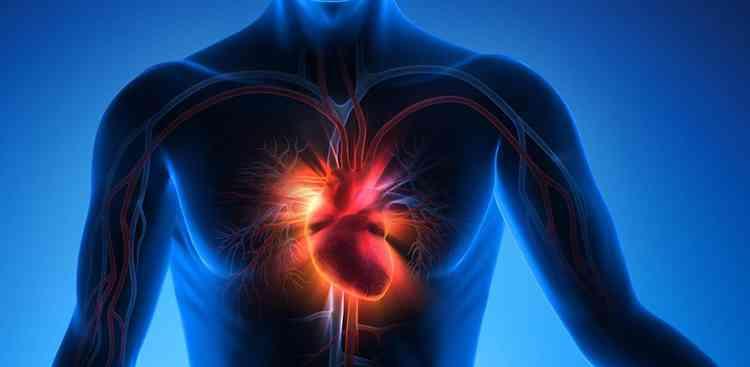 Баклажан поможет при заболеваниях сердца