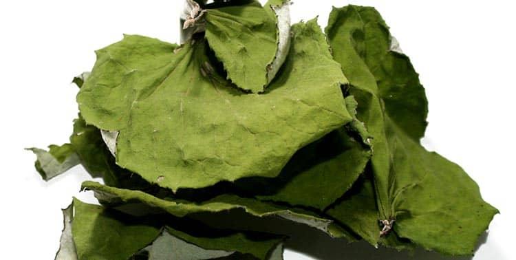 Мать-и-мачеха компресс из листьев